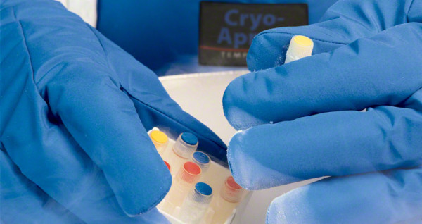 Kälteschutzhandschuh Cryo Gloves
